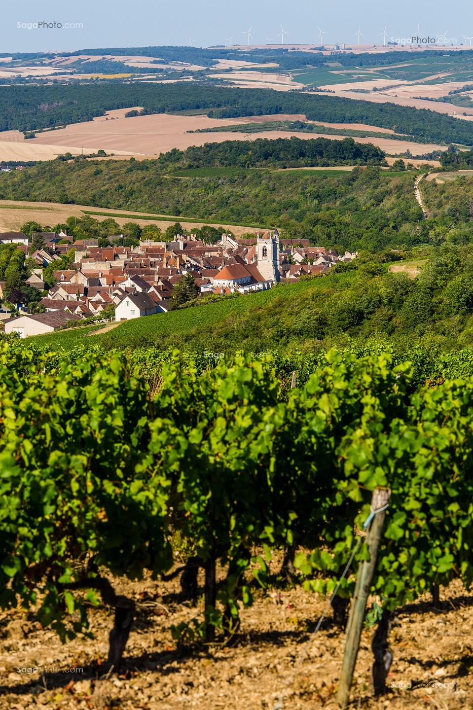 VIGNOBLE, IRANCY, YONNE, BOURGOGNE, FRANCE