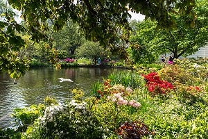JARDIN SAINT JAMES PARK, PALAIS DE BUCKINGHAM, LONDRES, GRANDE-BRETAGNE, EUROPE